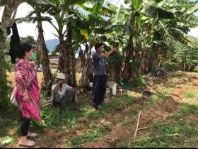 PEMANFAATAN PLANT GROWTH PROMOTING RHIZOBACTERIA DAN MIKORIZA UNTUK MENINGKATKAN PRODUKSI CABAI PADA LAHAN SUB- OPTIMAL
